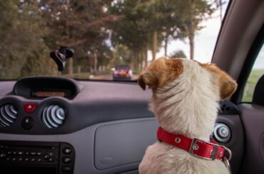 Best Dog Road Trip Route Planner