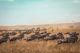 best time to visit kenya for an africa safari