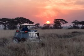 determining the cost of an african safari